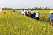 Hội thảo đầu bờ đánh giá chất lượng phân bón NPK Đình Vũ tại Thái Bình