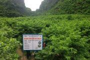 Thành công từ mô hình trình diễn phân bón NPK Đình Vũ trên cây na ở Lạng Sơn